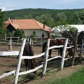 The horse farm and forest school of Babatvölgy - Gödöllő Hills (Gödöllői-dombság), Maďarsko