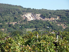 A stone pit (a mine) on the hillside, and in the foreground grapevines can be seen - Máriagyűd, Macaristan