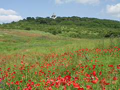 Red poppy-flood at the end of May - Mogyoród, Ungaria