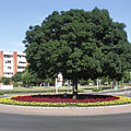 Tree and flowers in the traffic junction at the roundabout - Paks, Hungría