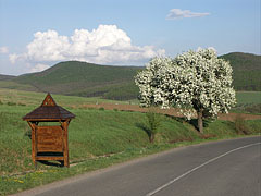 The border of the village with the Nógrád Hills and flowering fruit trees - Hollókő, Madžarska