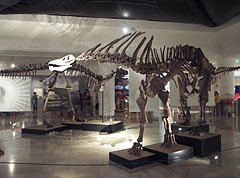 Amargasaurus cazaui, a member of the sauropod dinosaurs, although it is smaller than its relatives, it is even more interesting - Budapest, Ungarn