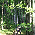 A walk in the forest in May - Bánkút, Ungarn