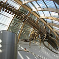 Whale skeleton on the ceiling of the lobby - Boedapest, Hongarije