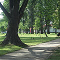 Shady walkway in the City Park of Ajka with a thick-trunked tree - Ajka, Ungari