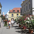 Pedestrian area with flowering oleander bushes - Győr, Ungari