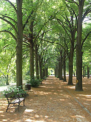 Entrance of the Elisabeth Park (Erzsébet-park) is lined with lime trees line - Gödöllő, هنغاريا