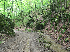 Glen forest with a brook  - Aggteleki karszt, Hungary