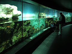 Aquarium, it was renovated and rebuilt in 1997 - Amsterdam, Netherlands