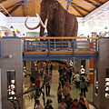 The two-story central hall of the museum with a mounted woolly mammoth - Budapest, Hungary