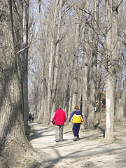 Walk in the great trees in the warm spring sunshine - Dunakeszi, Hungary