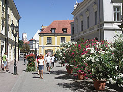 Pedestrian area with flowering oleander bushes - Győr, Hungary
