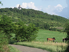 Paradise landscape also for the horses - Mogyoród, Hungary