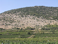 Vineyards on the south side and at the foot of the Szársomlyó Hill - Nagyharsány, Hungary