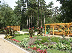 Flowerbeds with annual flowers and other plants - Siófok, Hungary