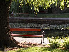 Lakeshore with benches and willow trees - Tapolca, Hungary