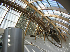 Whale skeleton on the ceiling of the lobby - ブダペスト, ハンガリー